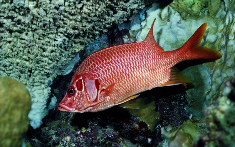 nature animals fish sealife wallpaper