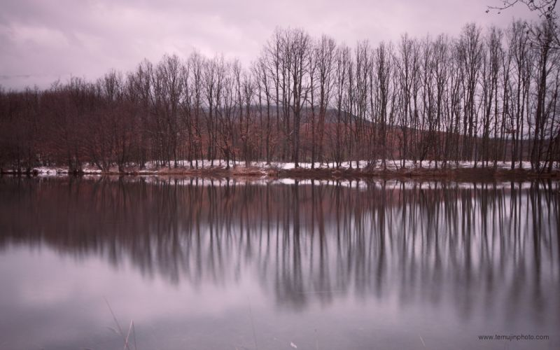 landscapes nature winter trees lakes vertical reflections wallpaper