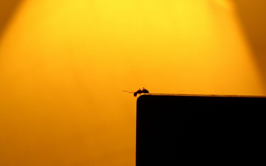 insects ants silhouettes sunlight wallpaper