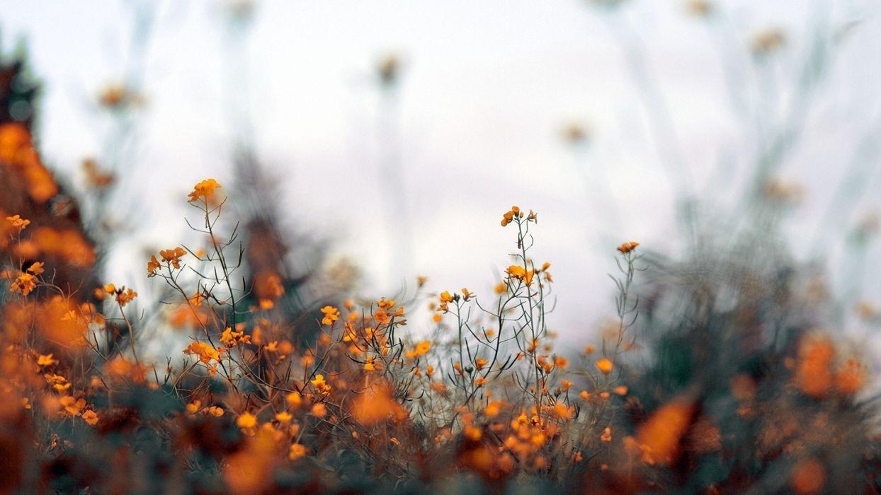 nature flowers plants depth of field wallpaper