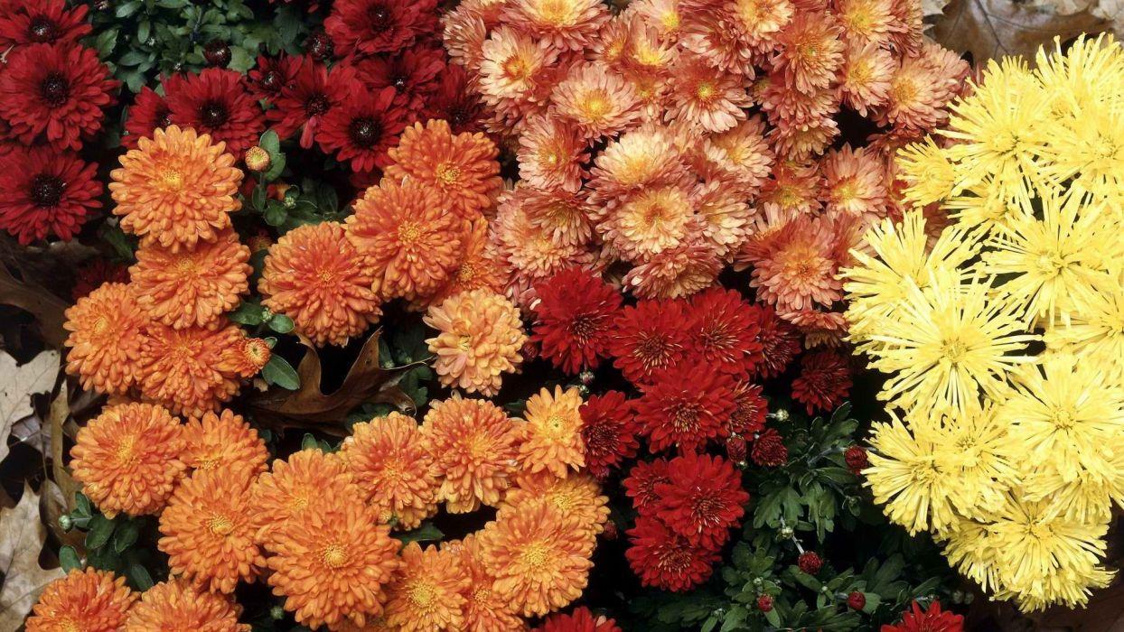 multicolor flowers wallpaper