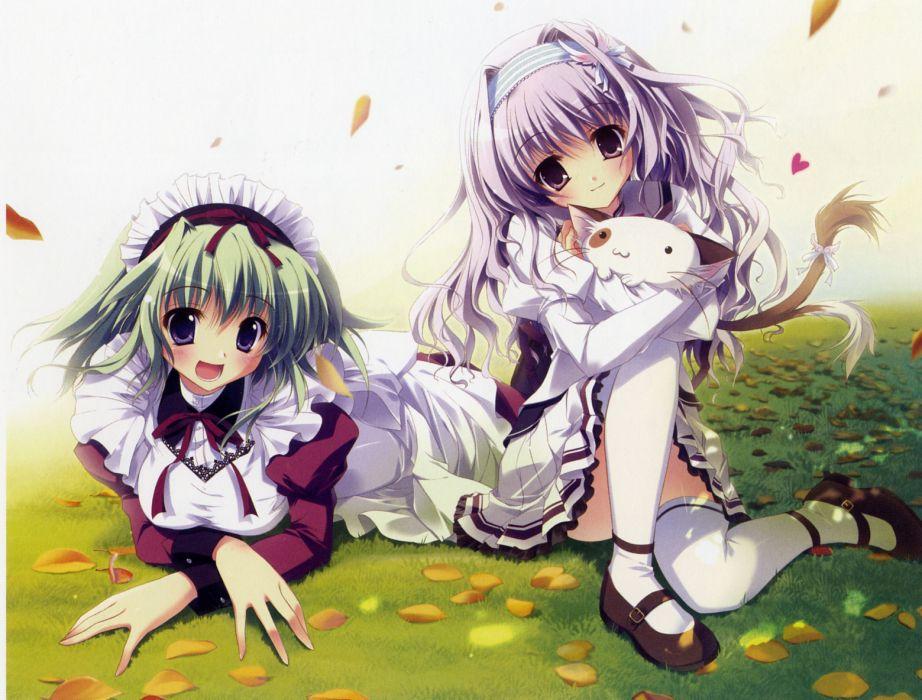amaha miu angelina nanatsu sewell izumi tsubasu mashiroiro symphony pannya tagme wallpaper