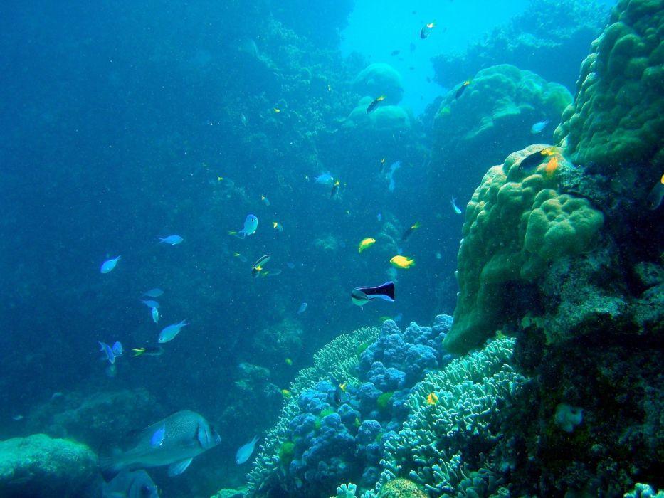 Ocean Fish Underwater Coral Reef Great Barrier Reef
