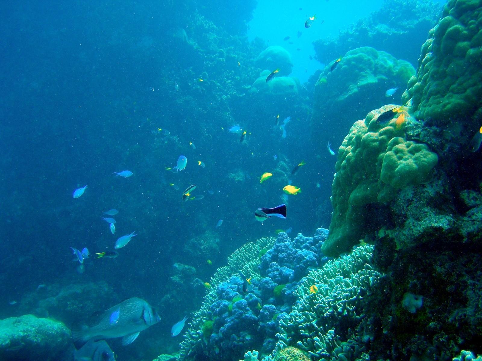 Cool Ocean Fish images