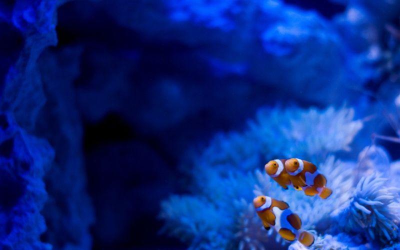 blue fish friends Finding Nemo ark underwater sea wallpaper
