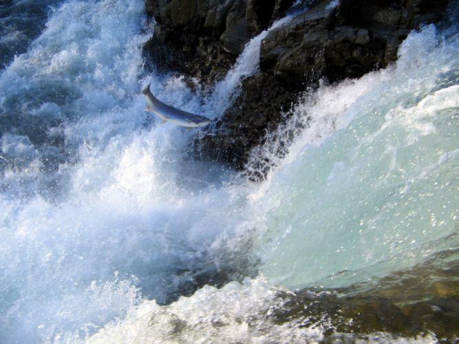 fish waterfalls wallpaper