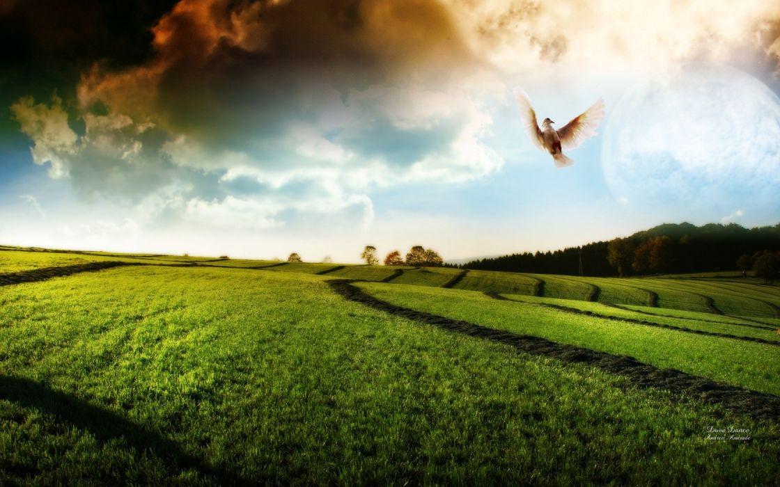 doves dance photomanipulation widescreen wallpaper
