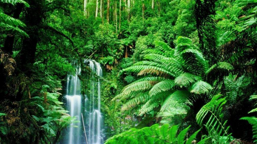 green landscapes trees jungle forest rainforest wallpaper