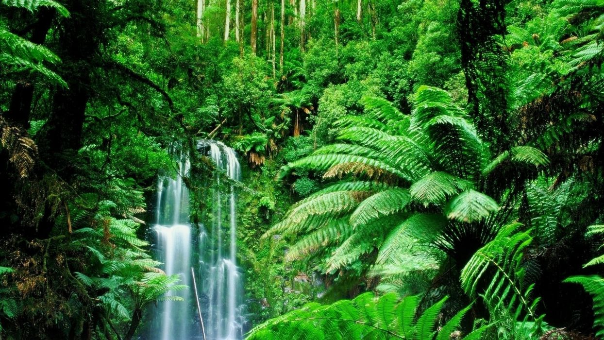 Green Landscapes Trees Jungle Forest Rainforest Wallpaper