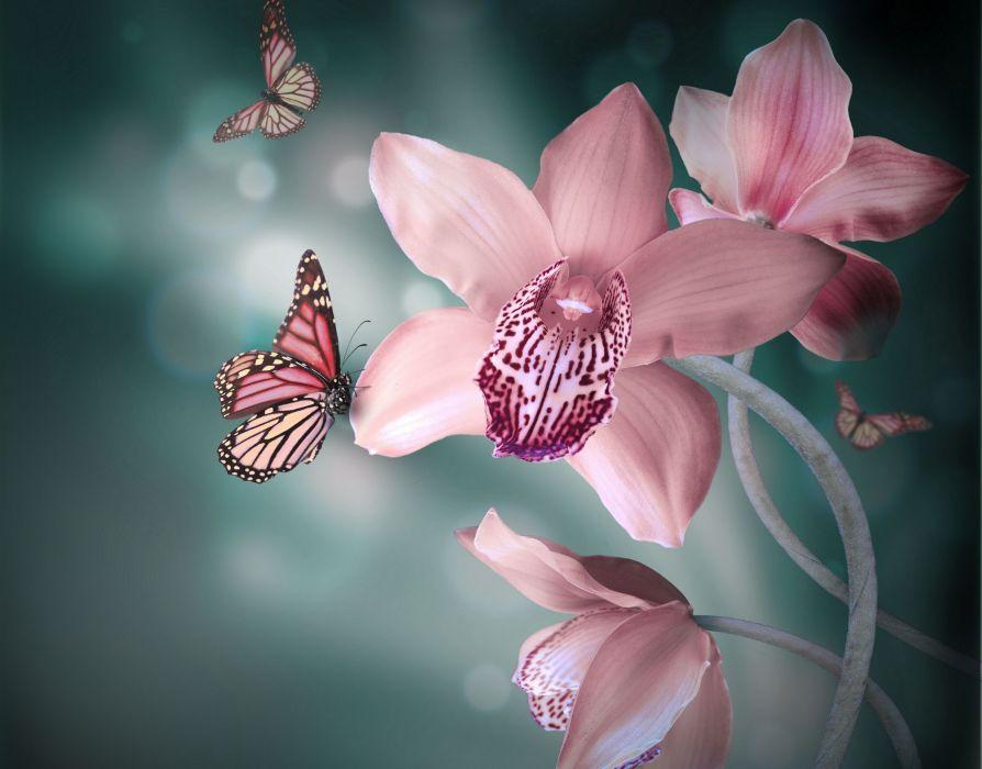 Flora orchids butterflies wallpaper