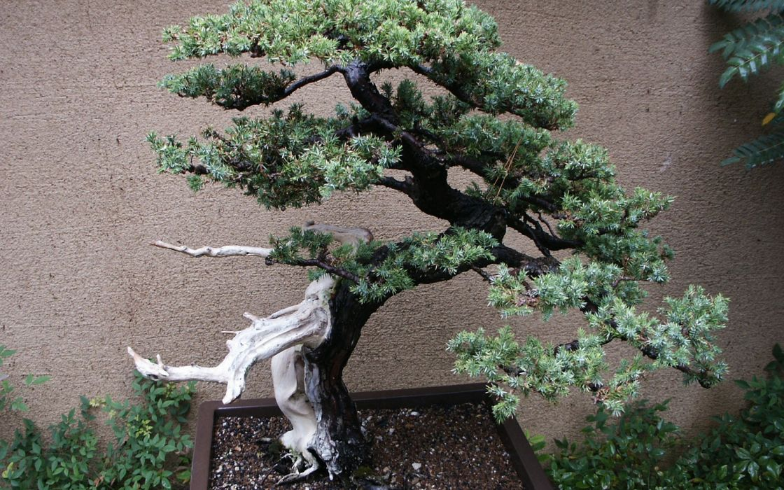 Japan nature trees bonsai wallpaper