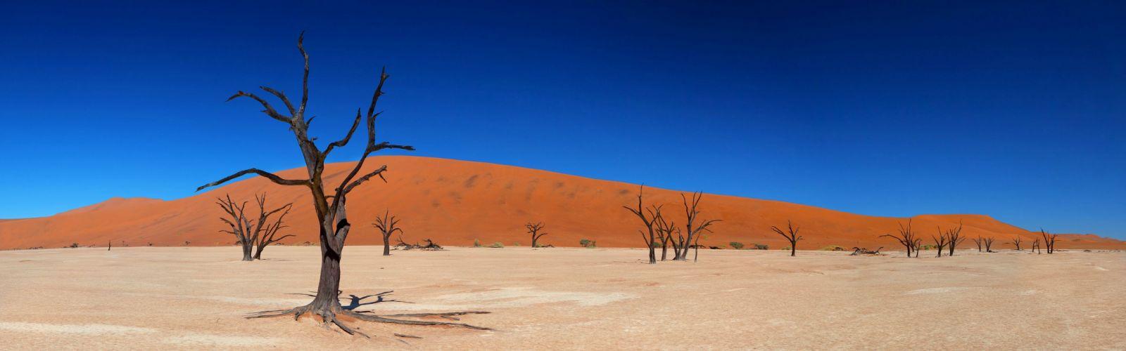 desert shrubs wallpaper