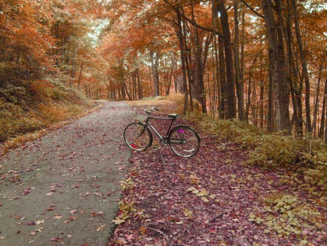 bicycles path wallpaper