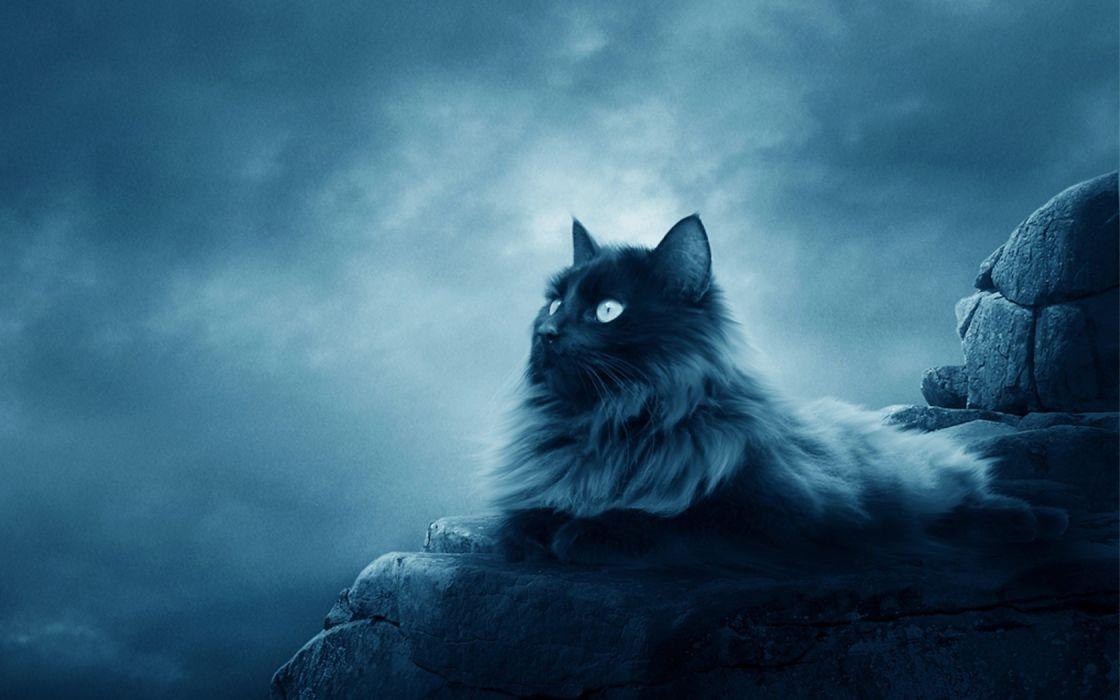 cats animals smoke Full Moon wallpaper