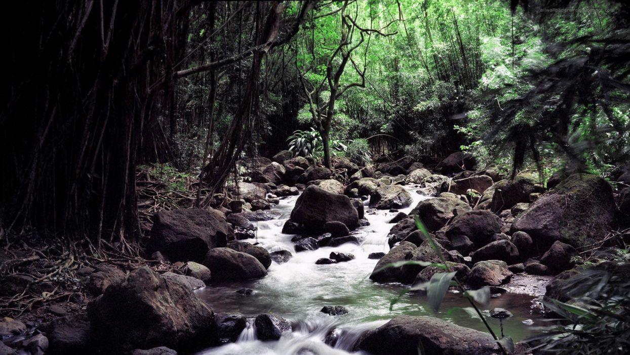 jungle rocks rivers wallpaper
