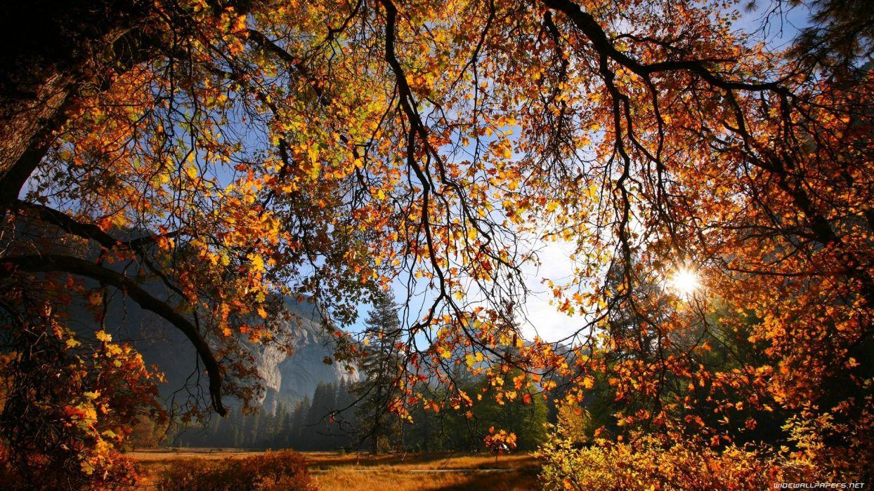 nature autumn (season) wallpaper