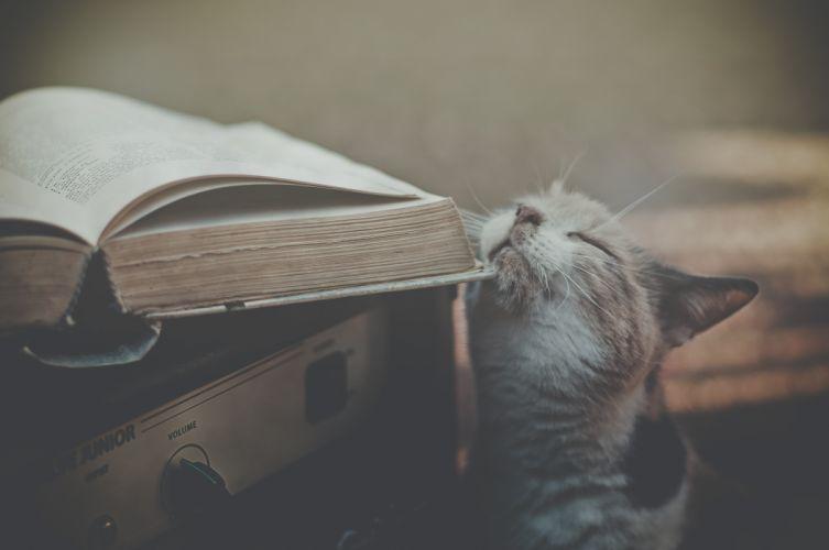 nature cats retro books wallpaper