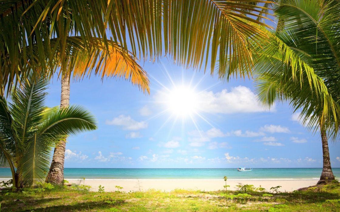 coast boat sea palm trees wallpaper