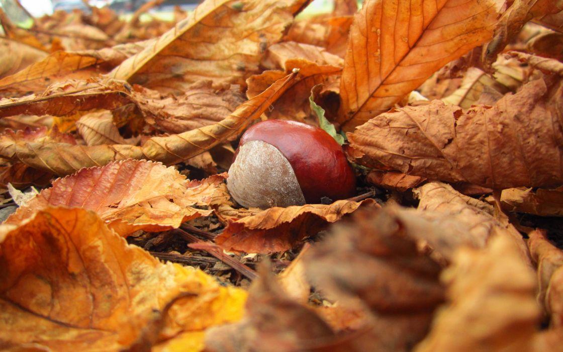 yellow nature chestnut leaves autumn wallpaper