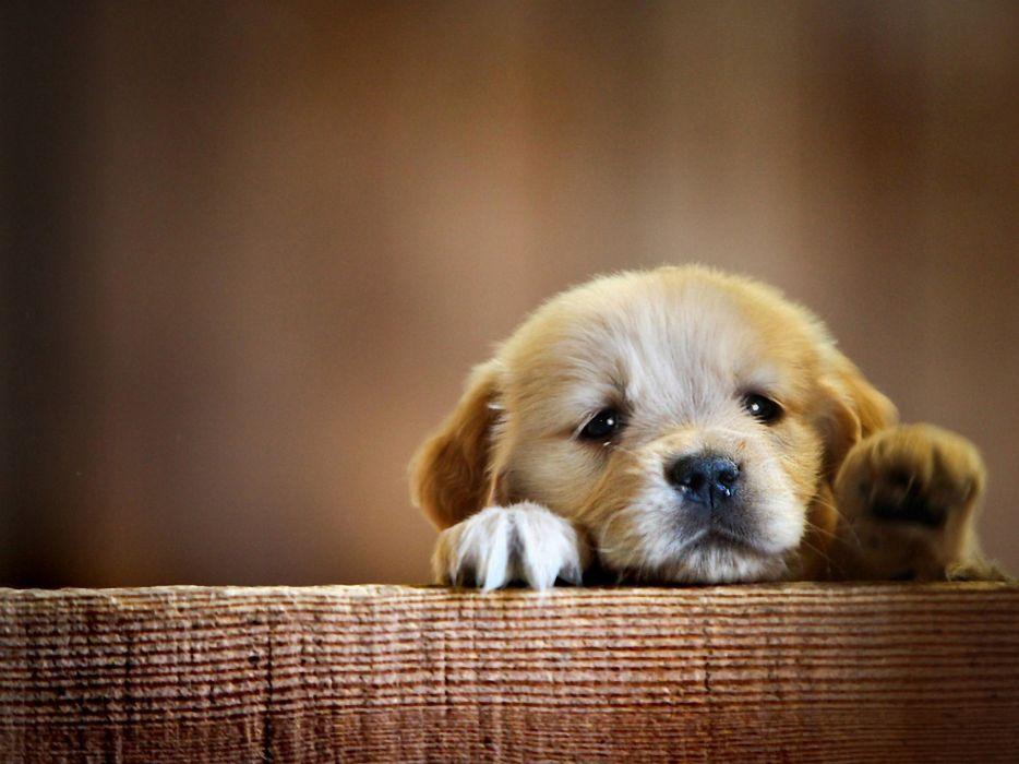 dog puppy beautiful wallpaper