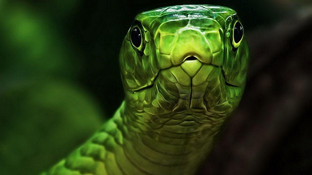 green snakes reptiles wallpaper