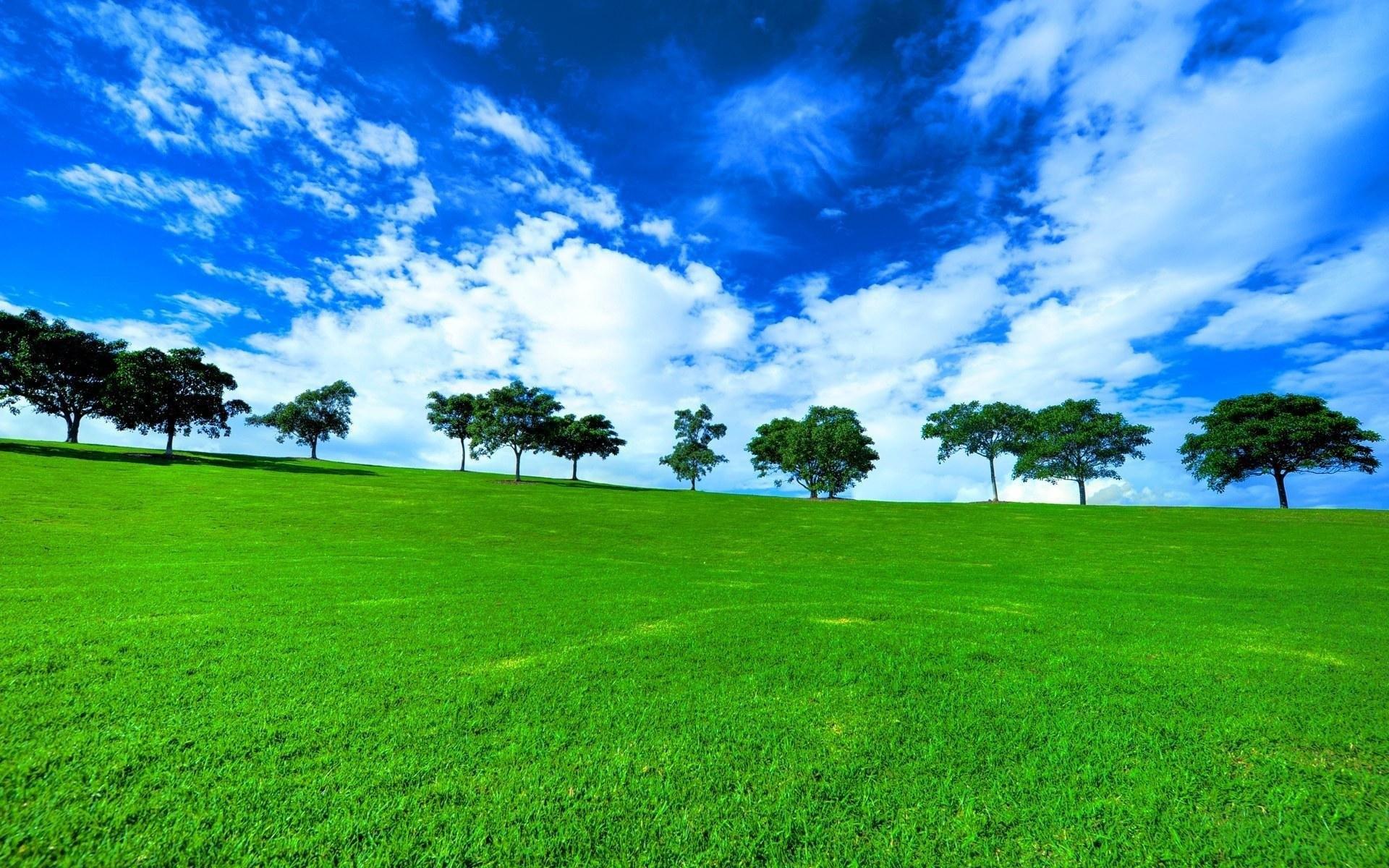 природа трава горизонт солнце деревья  № 2760815  скачать