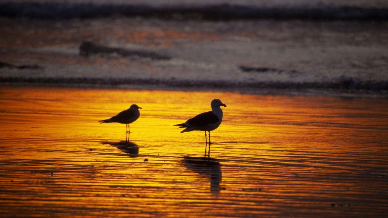 sunset California seagulls Southern wallpaper