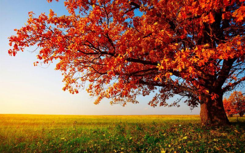 autumn tree landscape wallpaper