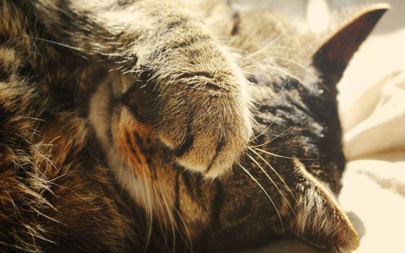 Cat Macro Paw wallpaper