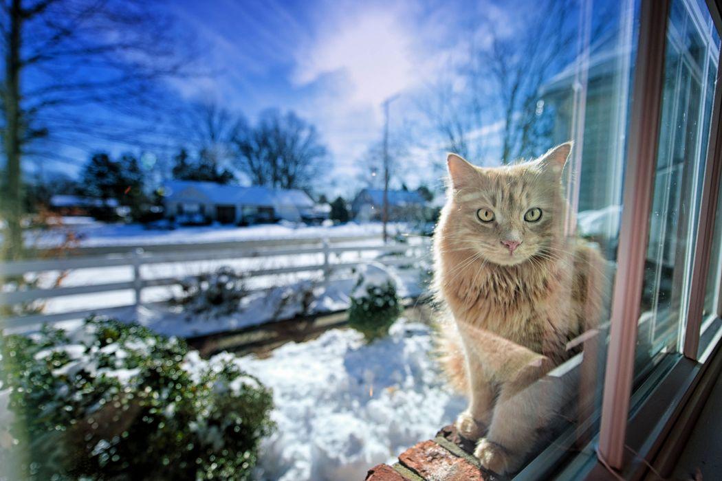 cat winter window light  wallpaper