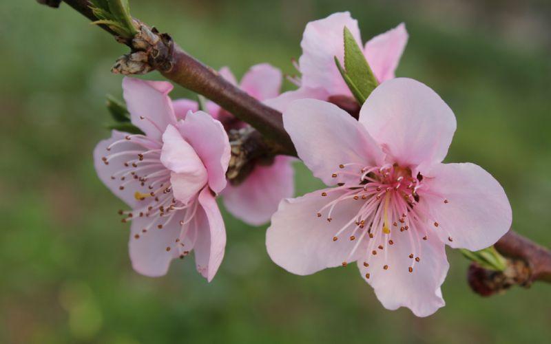 Flower Macro blossom wallpaper