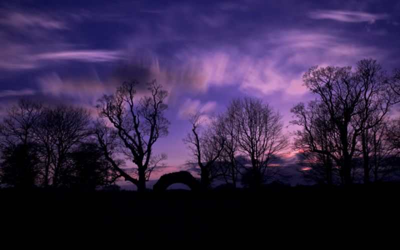 evening sunset trees silhouettes sky clouds wallpaper
