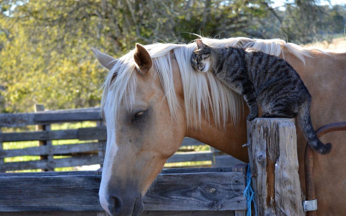 horse cat friendship wallpaper