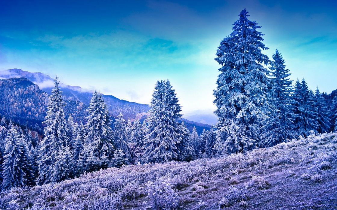 mountains trees frost winter wallpaper