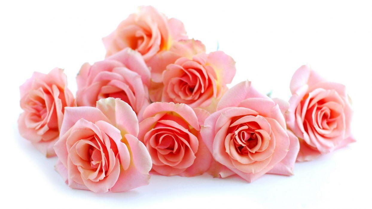 roses beautiful flowers flower bouquet wallpaper