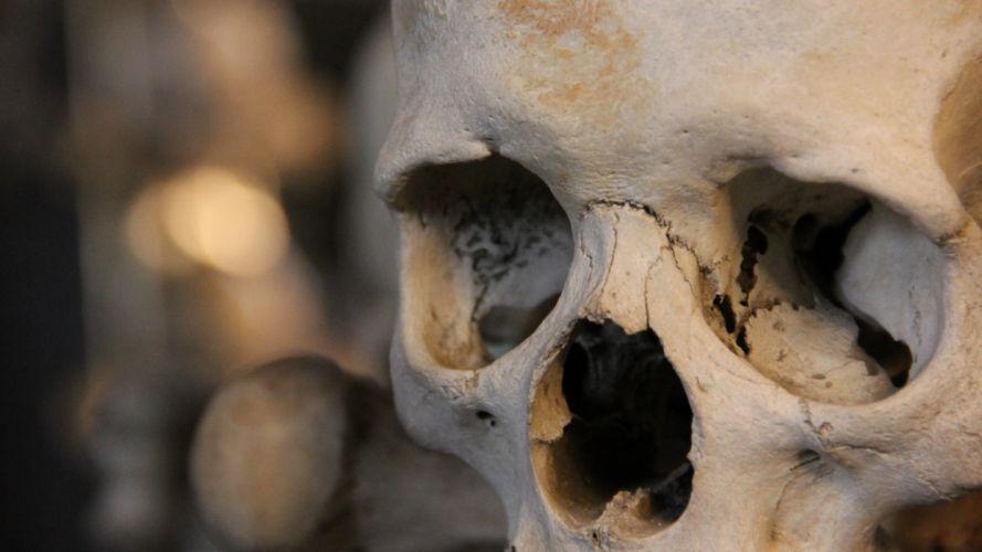 Skull Bones f wallpaper