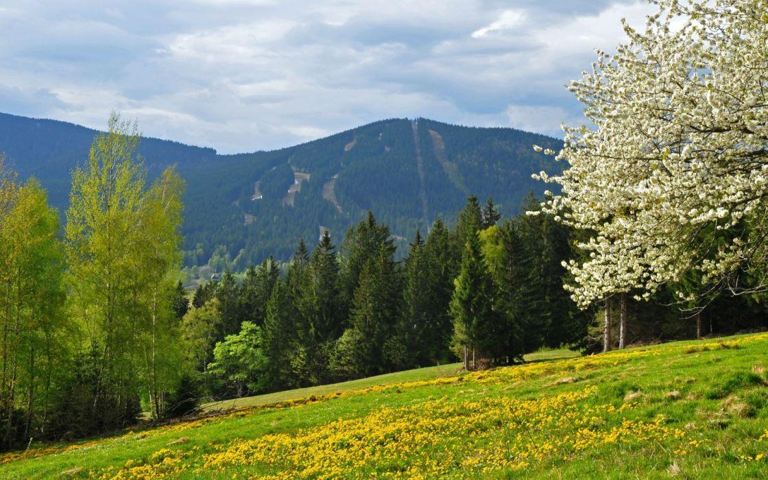 spring mountains forest field Czech Republic Bohemian Forest wallpaper