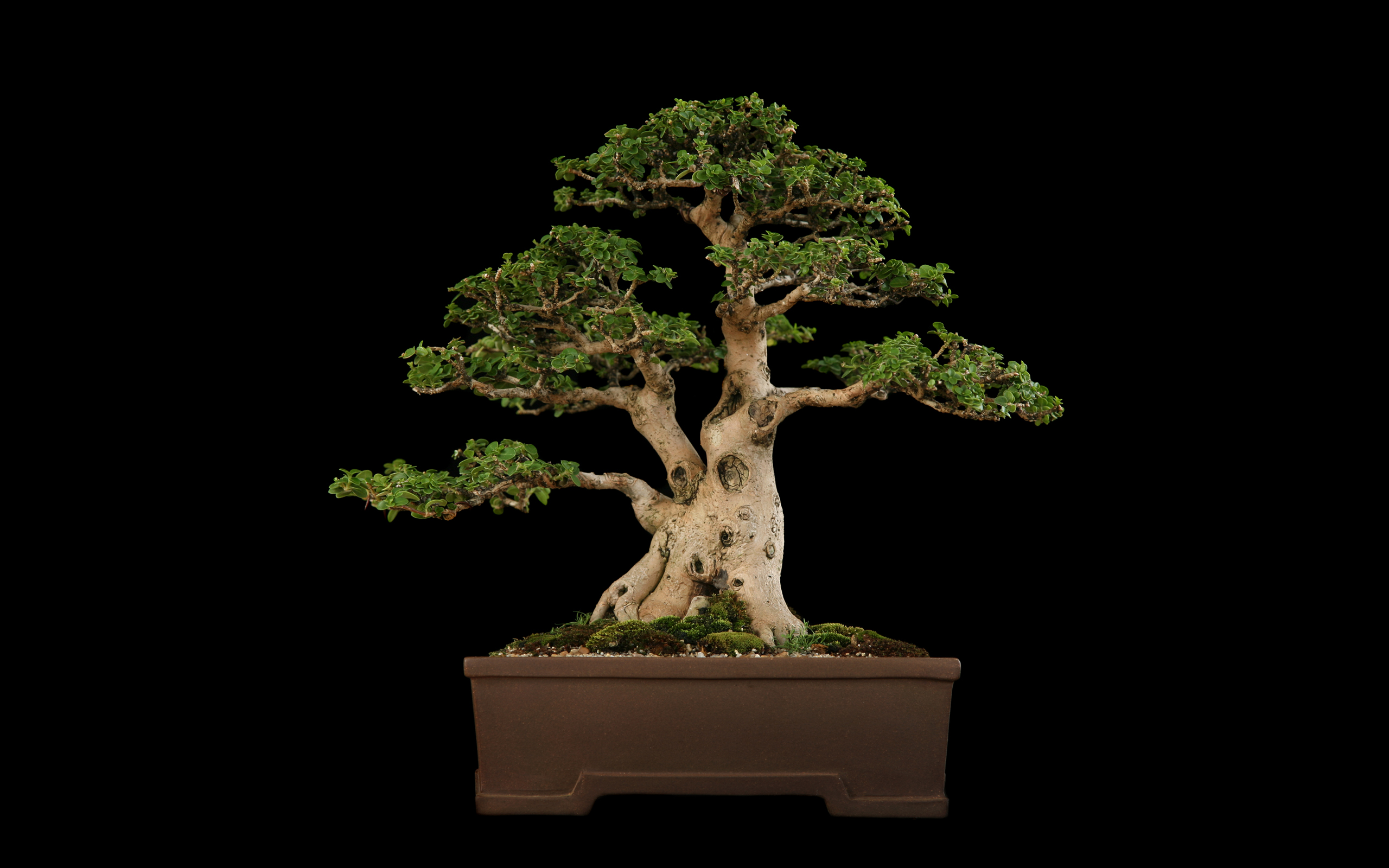bonsai wallpaper 03 ndash - photo #11