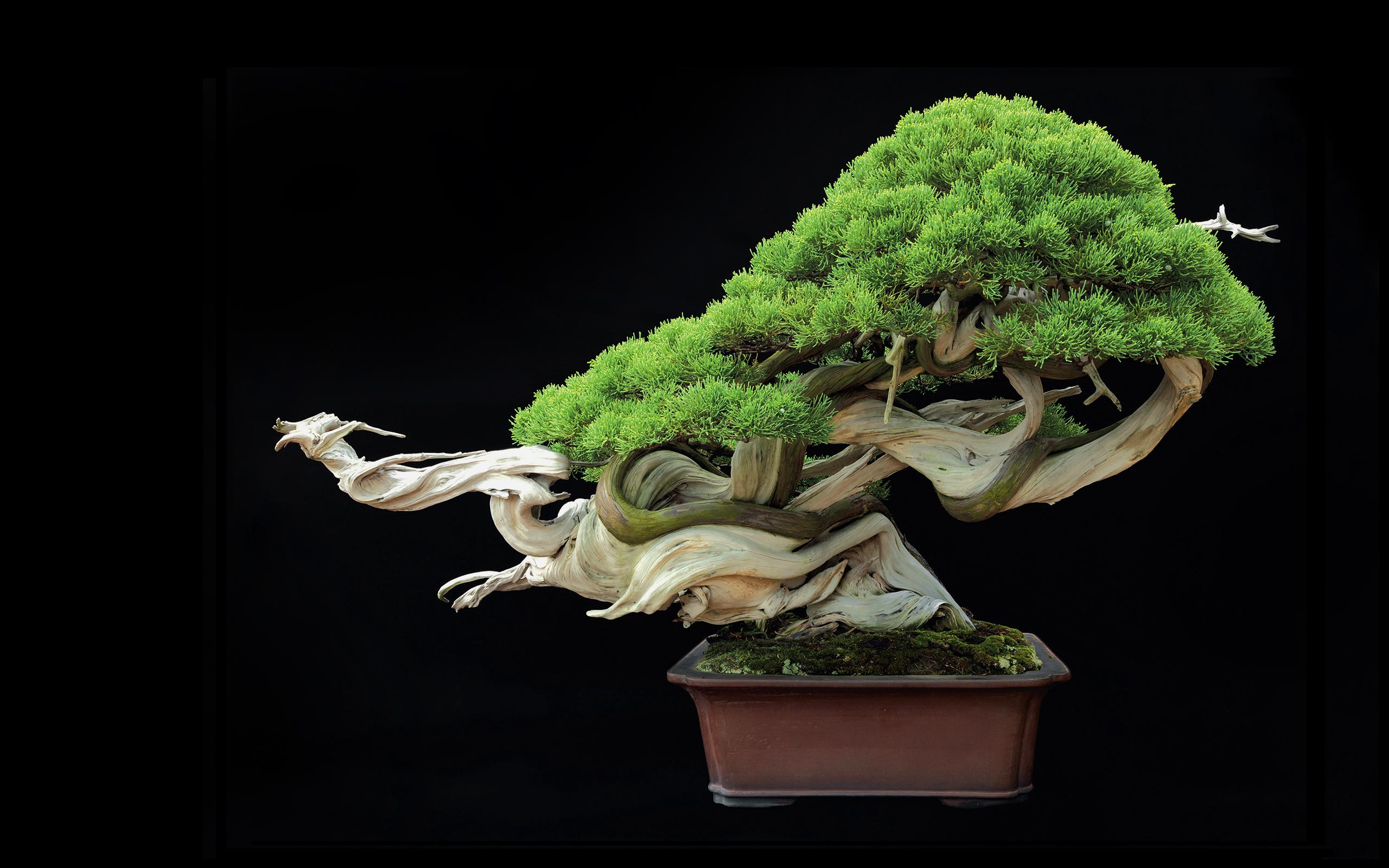 bonsai wallpaper 03 ndash - photo #2