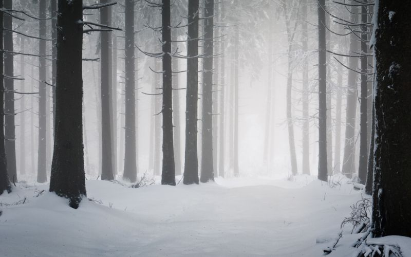 Trees Forest Snow Winter f wallpaper