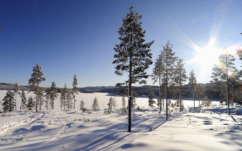 winter trees sunrise wallpaper