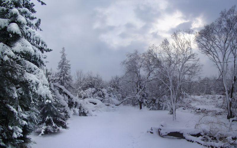 winter snow trees landscape h wallpaper