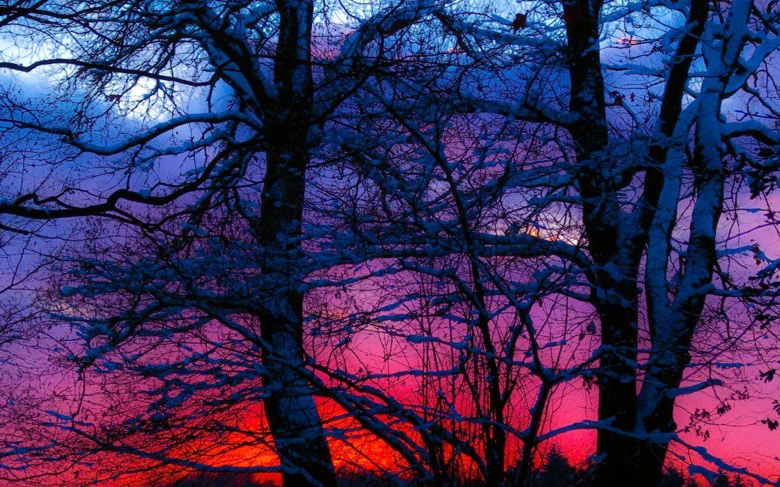 winter sunset trees snow landscape wallpaper