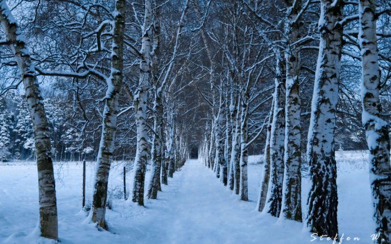 winter trees road wallpaper