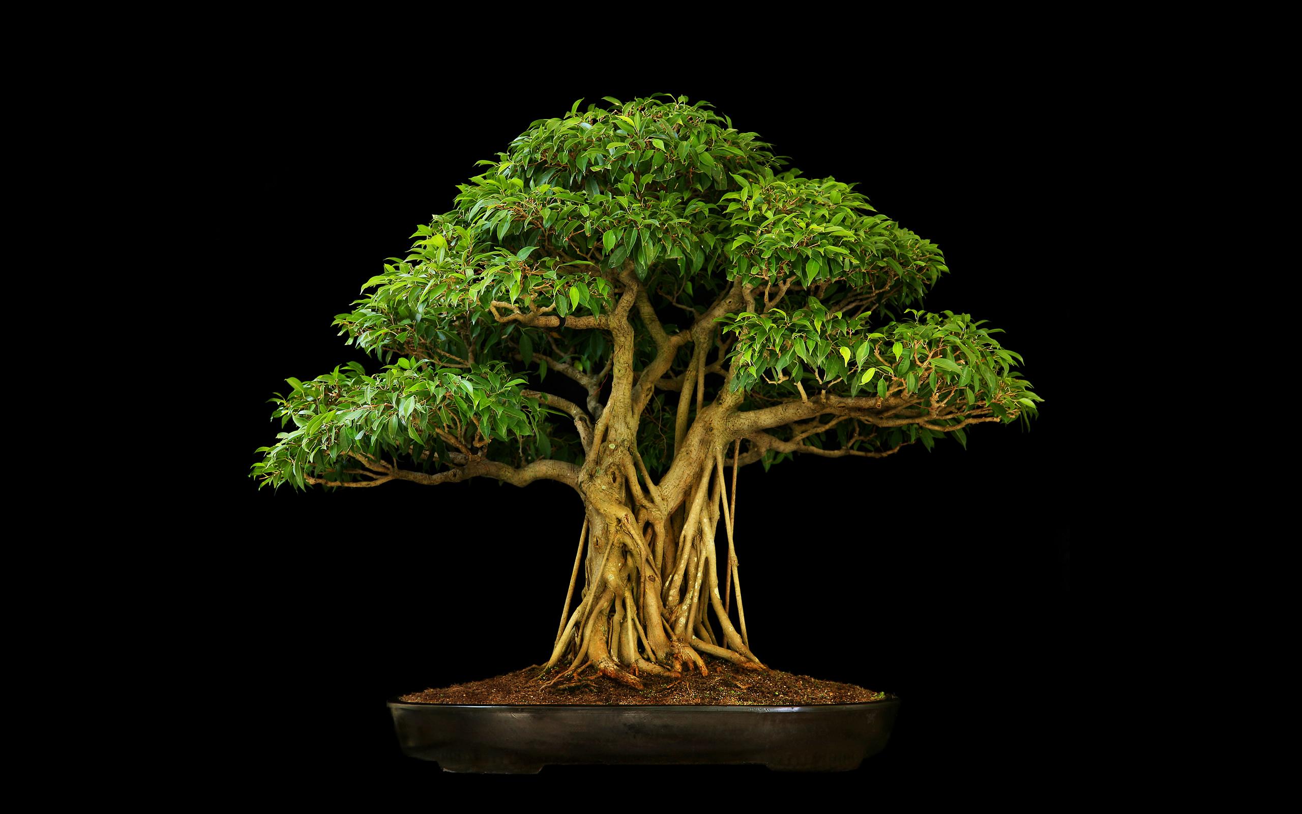 bonsai wallpaper 03 ndash - photo #14