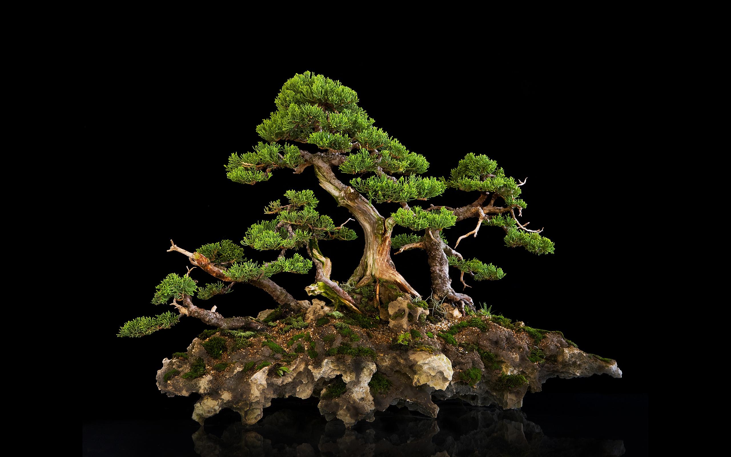 bonsai wallpaper 03 ndash - photo #20