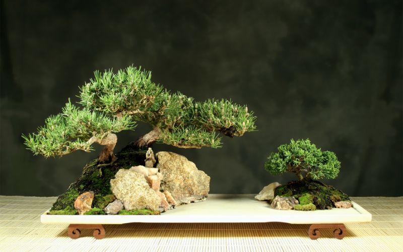 Tree Bonsai Tree leaves g wallpaper