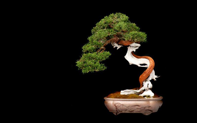 Tree Bonsai Tree leaves c wallpaper