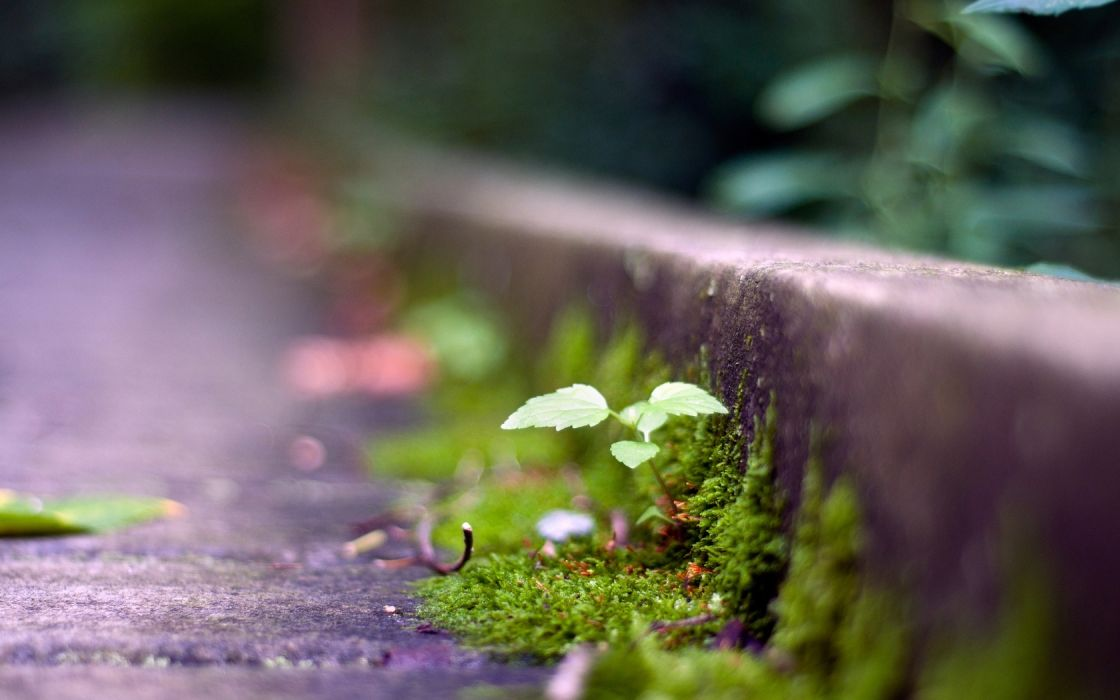 grass moss light dark wallpaper