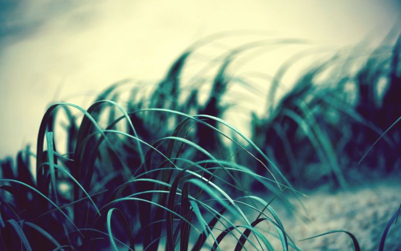 grass wind light dark swaying wallpaper